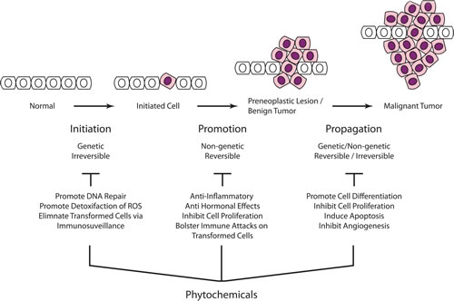 Carcinogenesis is a multistep process that ultimately reprogram a normal cell into a cancer cell.