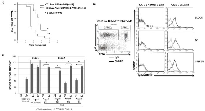 Notch2 receptor is critical for CLL development in IRF4