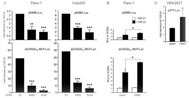 Depletion of PAR2 decreases the sensitivity of TGF-β/Smad responsive reporters to TGF-β1 stimulation.
