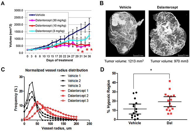 Dalantercept slows RCC tumor growth and affects tumor vasculature in vivo.