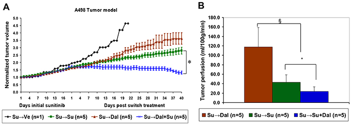 Combination of dalantercept with sunitinib slows tumor growth and further reduces tumor blood flow in sunitinib resistant tumors.