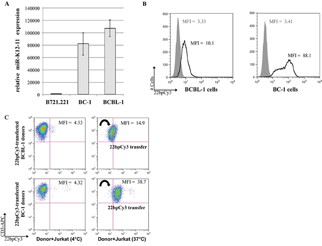 BC-1 cells express high levels of miR-K12-11 and efficiently spread miRs to T cells.