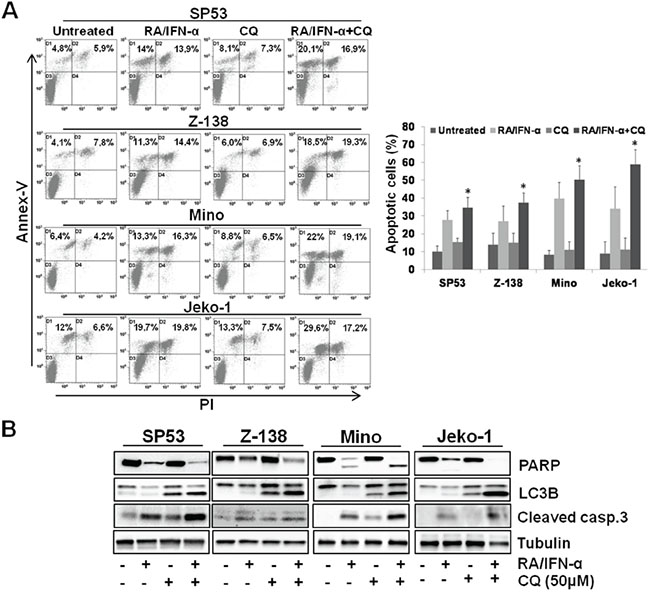 Blockade of RA/IFN-α-induced autophagy enhanced the extent of treatment-induced apoptosis.