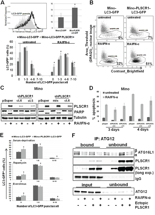 PLSCR1 overexpression reduces cell propensity to undergo autophagy.