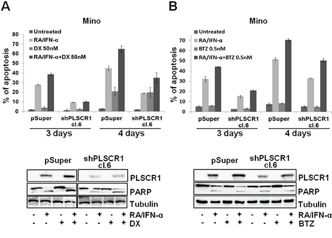 PLSCR1 knock down reduces MCL cell sensitivity to the additional pro-apoptotic effect of DX and BTZ with RA/IFN-α.
