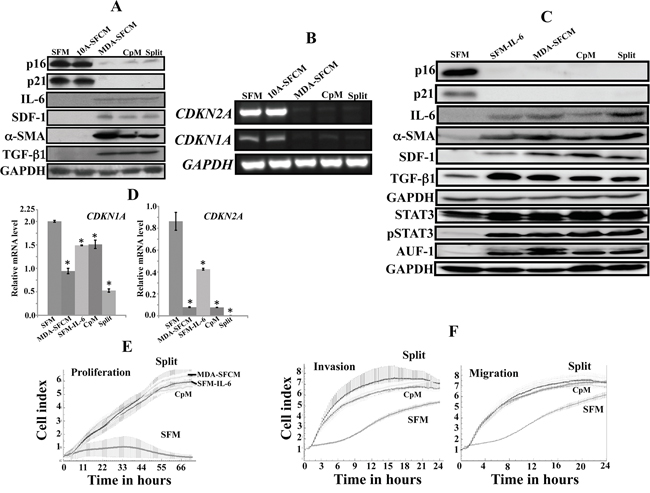 Breast cancer cells and IL-6 persistently activate breast stromal fibroblasts.