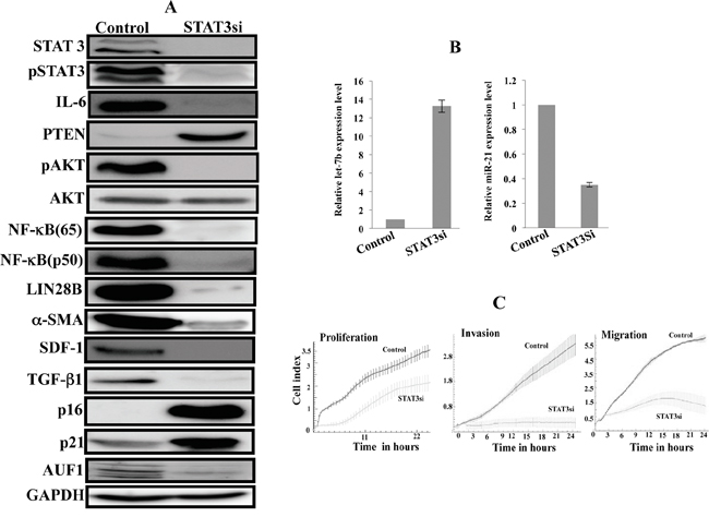 STAT3 inhibition by siRNA persistently inhibits the IL-6/STAT3/NF-κB feedback loop and inactivates myofibroblast cells.