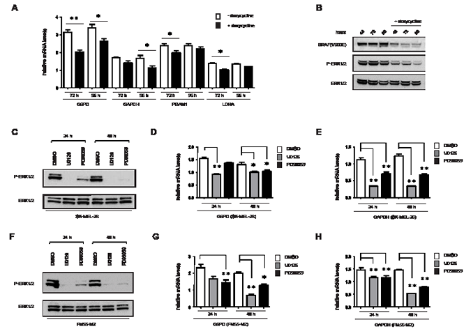 Expression of metabolic genes is affected by