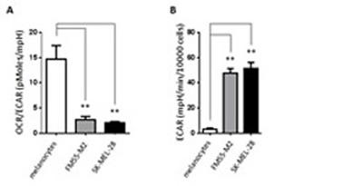 Basic metabolic characteristics of primary melanocytes and malignant melanoma cells.