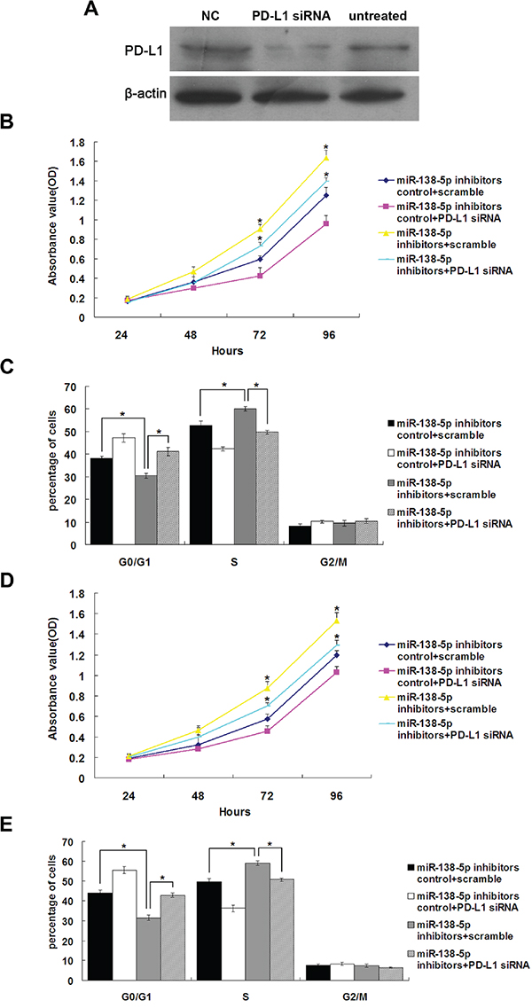 The growth-promoting effects of miR-138-5p inhibition were attenuated by endogenous PD-L1 knockdown in colonic epithelium cells.