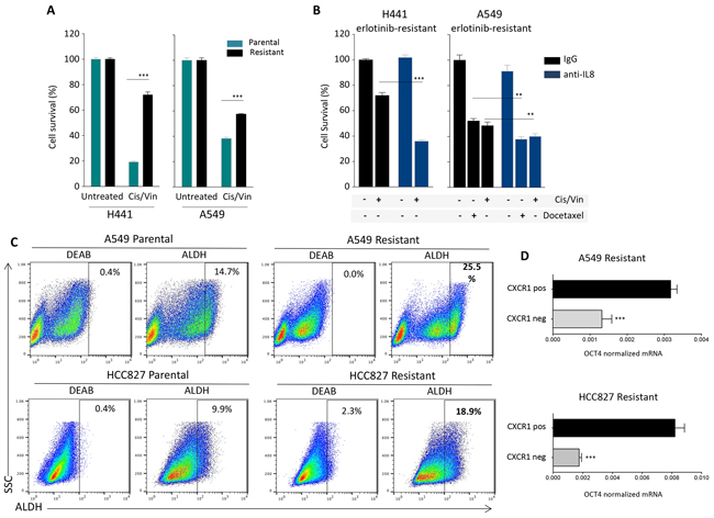 IL-8-dependent chemotherapy resistance and stemness.