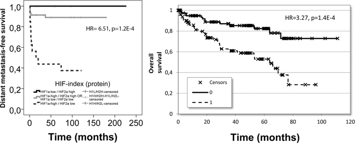 The prognostic performance of the identified HIF-index constructed from HIF1α and HIF2α: in our patient cohort for distant metastasis-free survival at protein level (left) and in the TCGA dataset for overall survival at mRNA level (right).