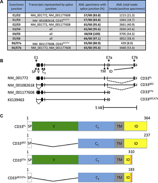 RNA sequencing to identify CD33 splice variants in human AML.