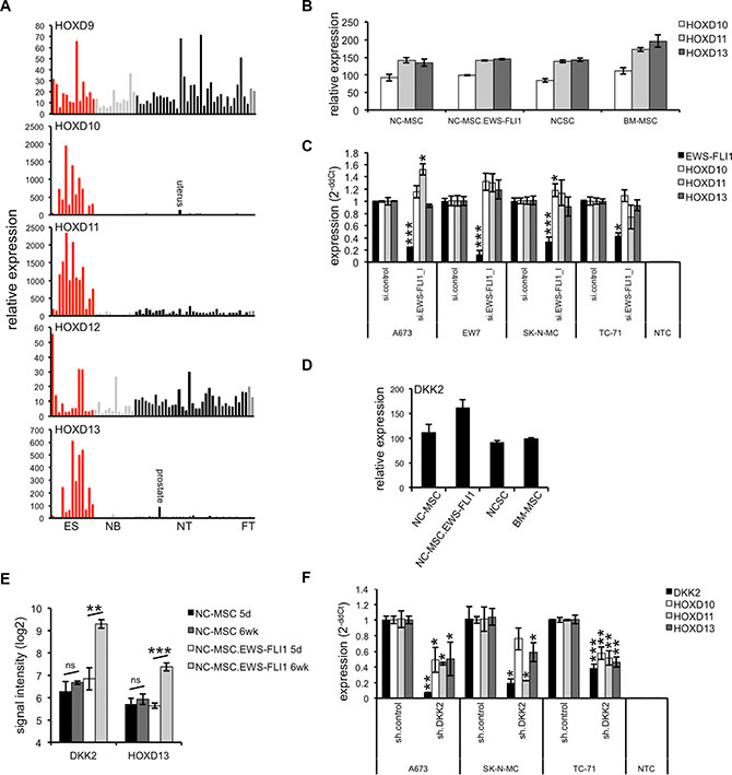 HOXD gene expression and regulation in ES.