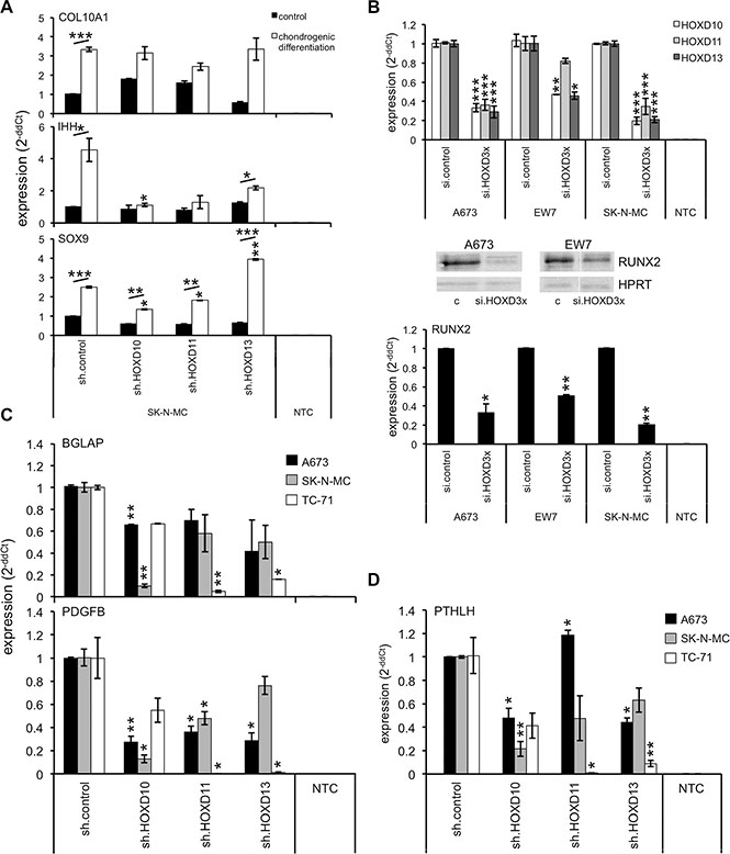 Posterior HOXD genes promote chondrogenic differentiation and expression of bone associated genes.