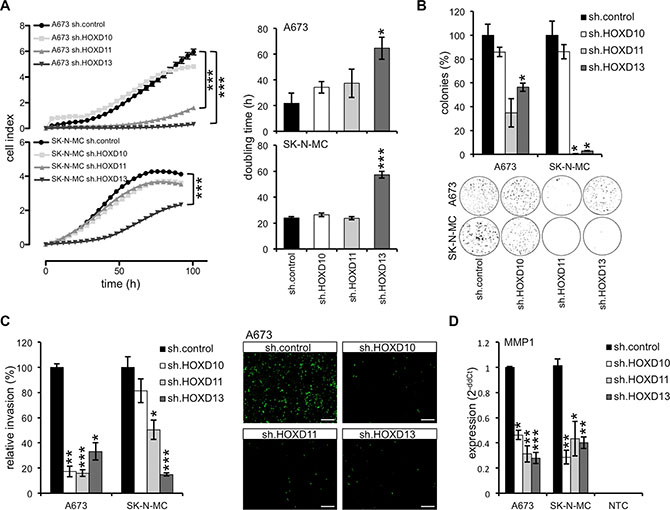 HOXD10, HOXD11 and HOXD13 promote growth and invasiveness of ES.