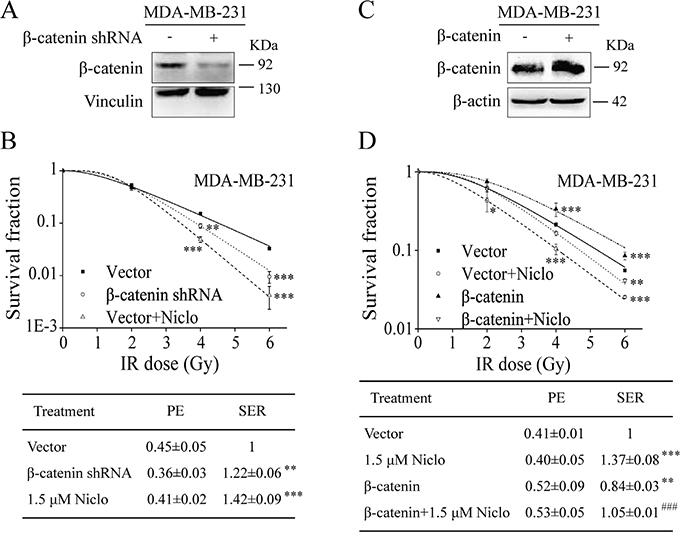 Niclosamide suppresses β-catenin-induced radioresistance in TNBC cells.