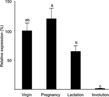 Expression of the H2AX–GFP transgene peaks at pregnancy and is significantly reduced in the involuting gland.