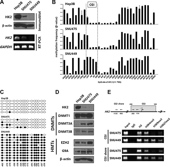 Hypermethylation of the HK2-CGI caused by the crosstalk of DNMTs and HMTs suppresses HK2 expression in HCC cell lines.