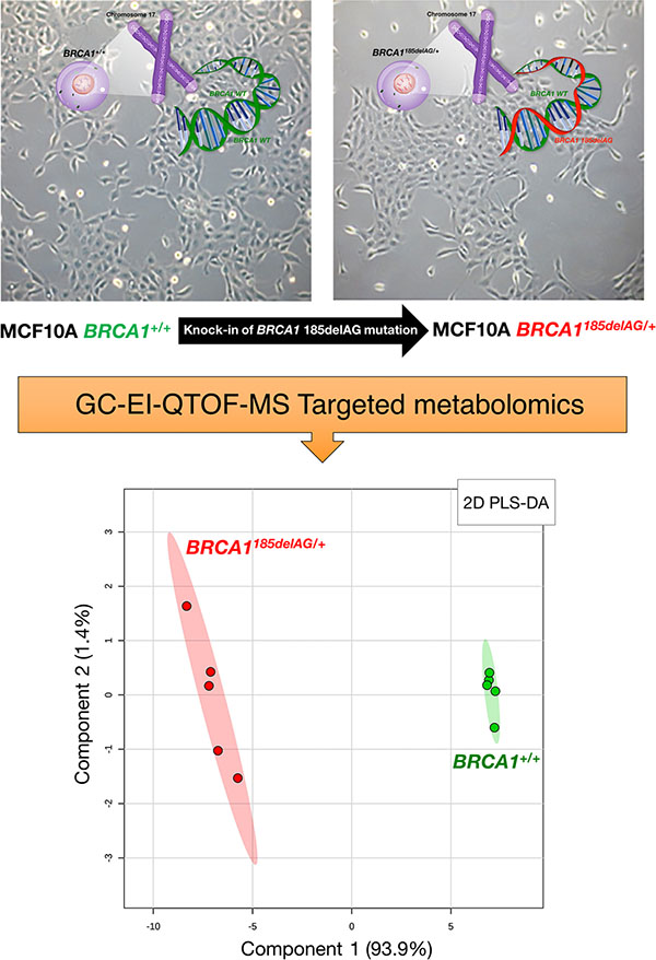 Metabolomic profiling of BRCA1 haploinsufficient breast epithelial cells.