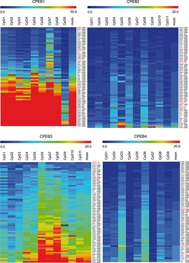 Methylation profile of CPEB1-4 genes in glioma and reference tissue measured by pyrosequencing.