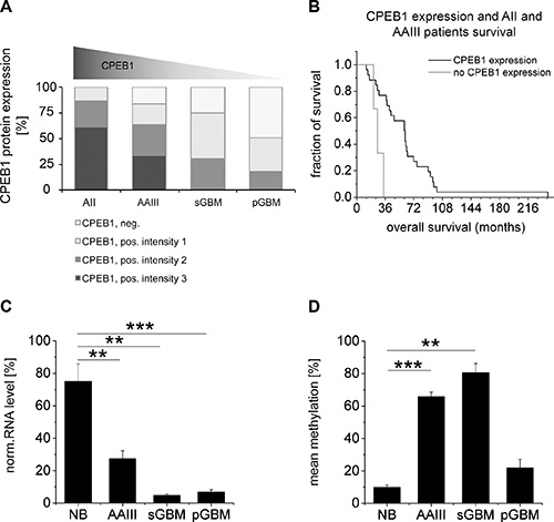 Comparison of CPEB1 methylation and expression with glioma patient survival.
