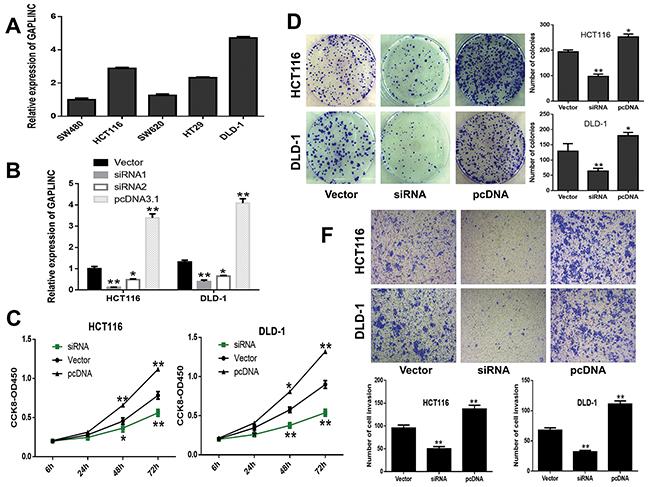 GAPLINC promoted CRC cell proliferation and invasion in vitro.