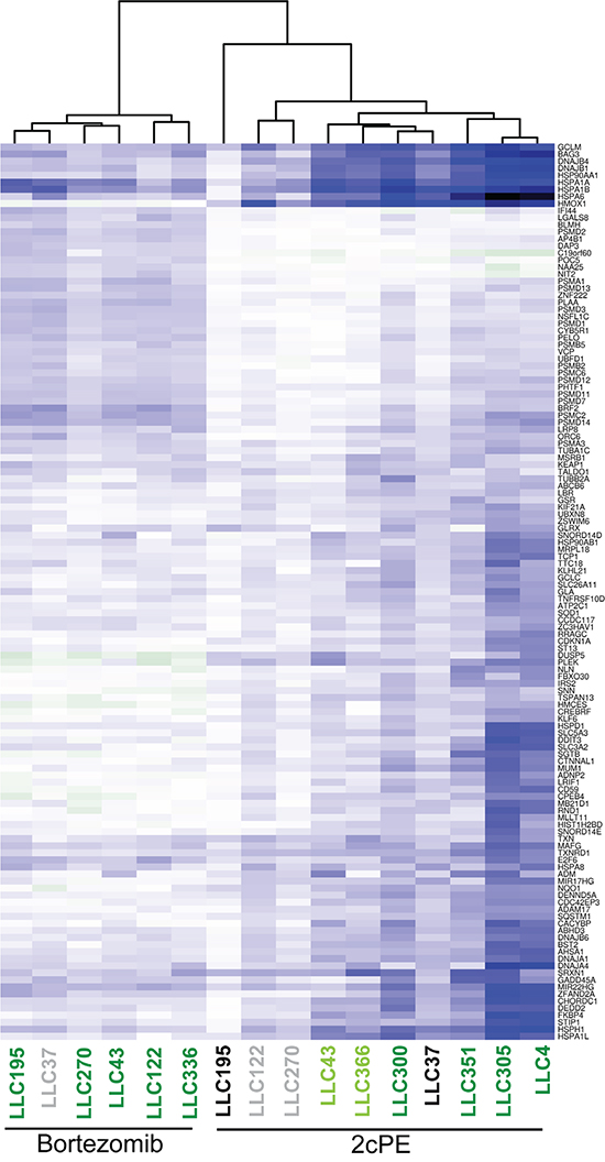 Resistance to 2cPE induced apoptosis correlates with the magnitude of changes in DEGs.