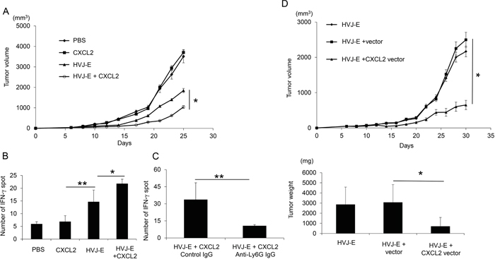 Enhancement of CTL activity against melanoma with the combination of CXCL2 and HVJ-E.