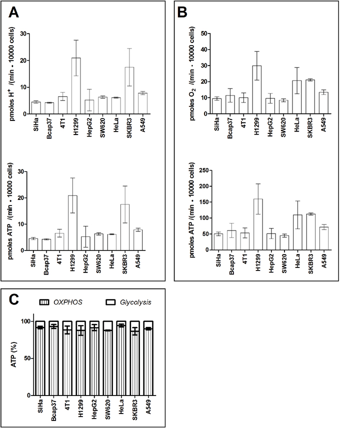 Percentage of ATP contributed by glycolysis and OXPHOS in cancer cells in Seahorse-XF medium supplemented with lactic acidosis.
