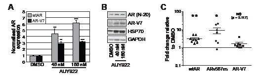 AUY922 modulates the levels of wtAR and AR-V7 transcript and protein.