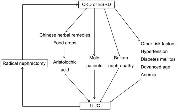 Scheme for relationship between chronic kidney disease (CKD) and upper tract urothelial carcinomas (UUC).