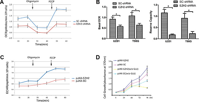 Upregulation of EZH2 induces an inclination toward glycolytic respiration.