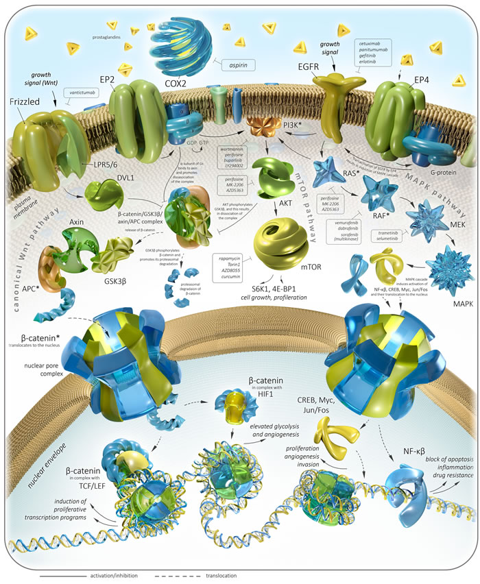 Colorectal cancer-related pathways and therapeutic targets with focus on Aspirin.