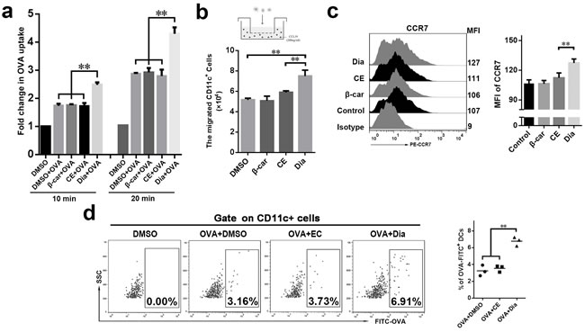 Dia efficiently enhanced DCs antigen capture