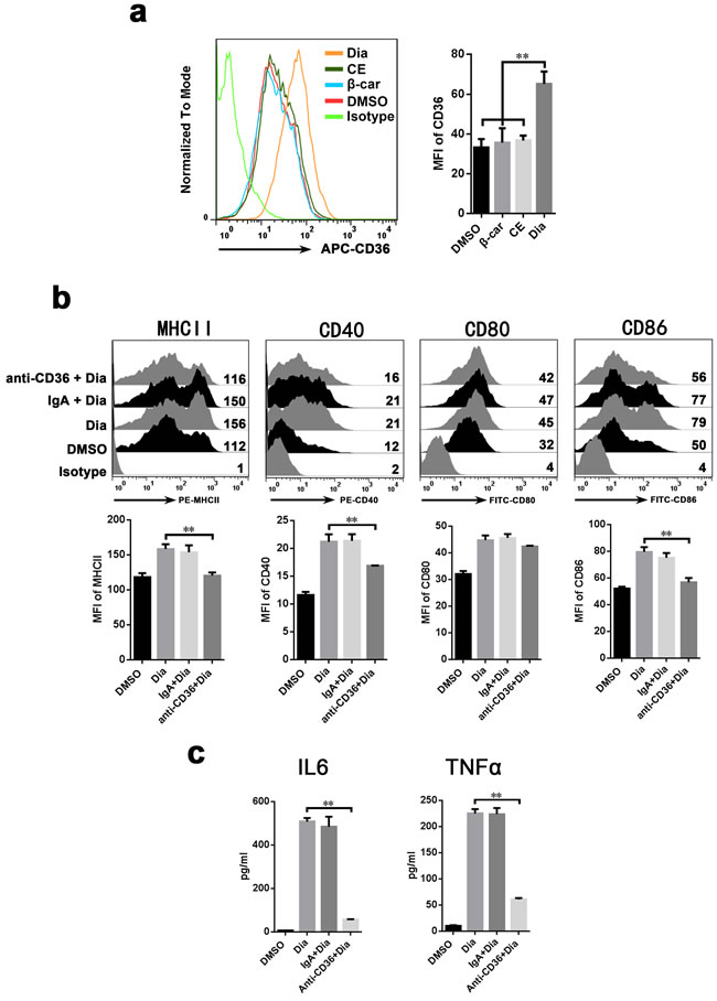 Antibody against CD36 inhibit the Dia-induced maturation of DCs.