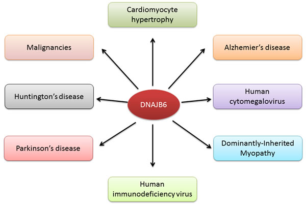 DNAJB6 is associated with various diseases and physiological processes.