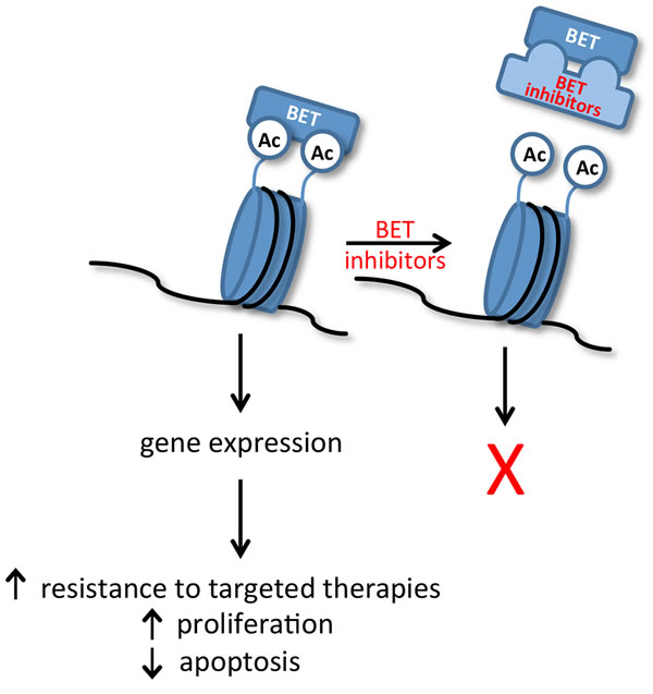 Binding of BET family proteins (BRD2, BRD3, BRD4 and BRDT) to acetylated (Ac) histones regulates expression of genes that contribute to cancer progression.