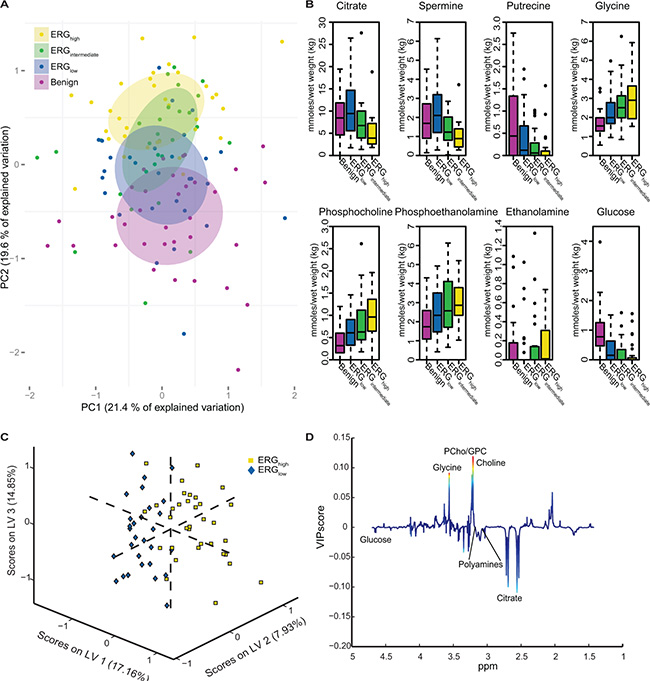 Multivariate analysis of spectral data and absolute quantification reveals metabolic differences between ERG groups.