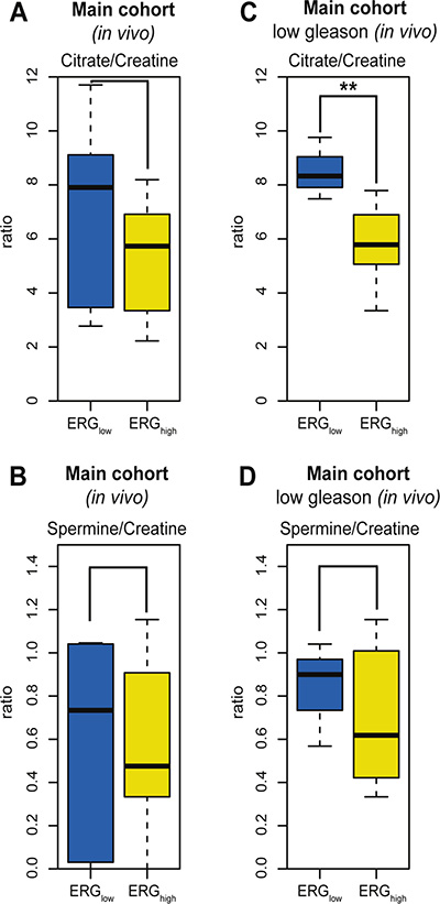 Box-plots for citrate and spermine comparing ERGhigh and ERGlow samples in the main cohort (in vivo).