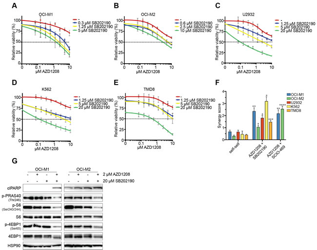 Pharmacological inhibition of p38 synergizes with AZD1208 through reduced mTOR signaling.