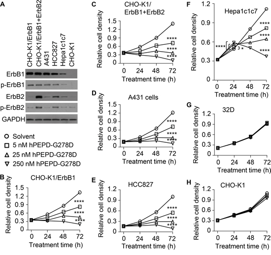Inhibition of cell proliferation by hPEPD-G278D.