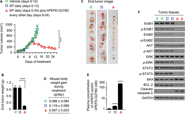 Inhibition of ErbB1-overexpressing tumors by hPEPD-G278D.