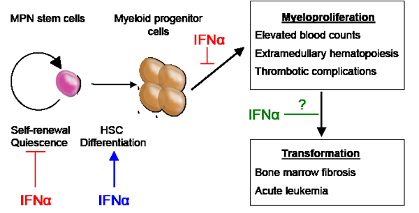 Figure1: MPN stem cells are responsible for disease initiation and propagation in vivo.