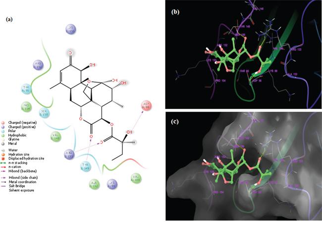 Figure 7ii: Docked complex of GLU and site-1 homology P-gp by Schrödinger glide application.