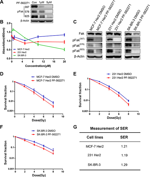 Fak inhibitor induced the radiosensitivity in HER2 overexpressing breast cancer cells.
