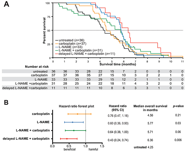 L-NAME treatment provides a survival advantage in mice with established Kras mutation-positive NSCLC, both as monotherapy and in combination with carboplatin.