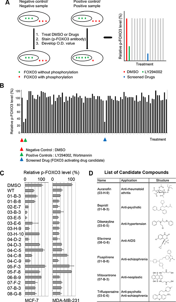 Primary and secondary screens of small-molecule drugs using a cell-based ELISA assay.