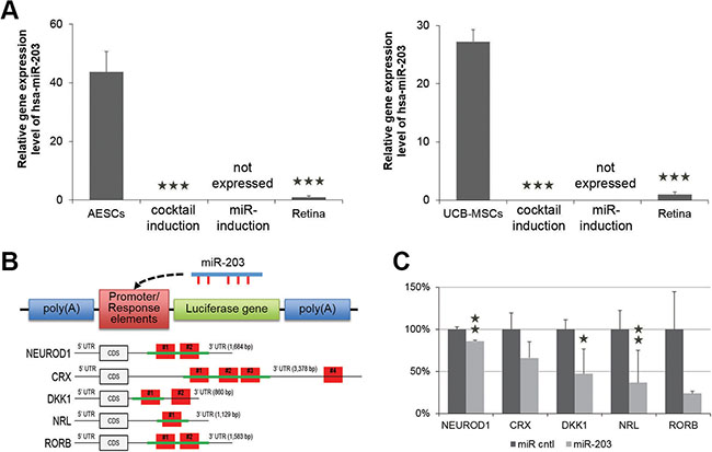 miR-203 directly targets genes involved in neural retina development.