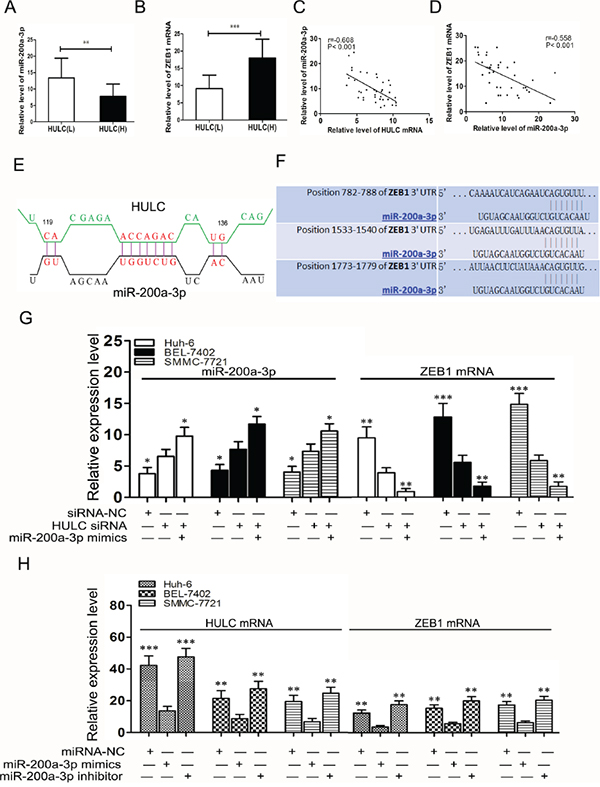 HULC increased ZEB1 by sequestering miR-200a-3p.